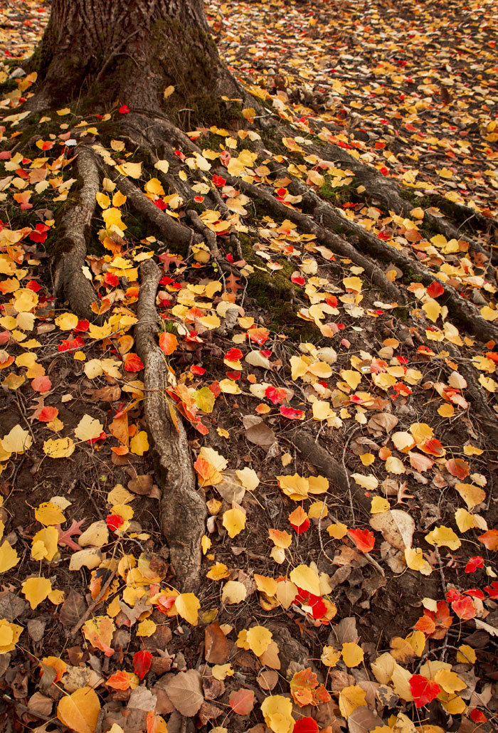 Colourful Leaves Scattered Around – Adelaide