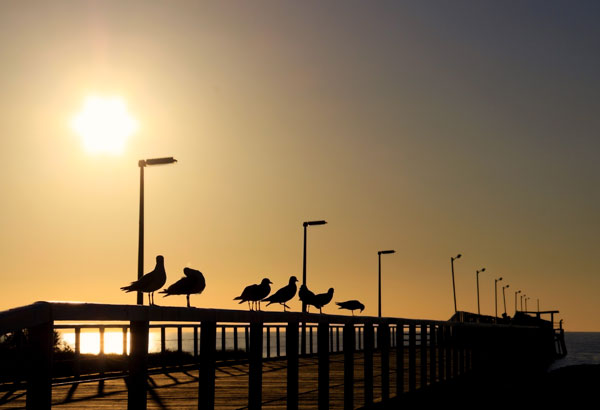 Seagulls in Silhouette on a Wooden Jetty, Adelaide